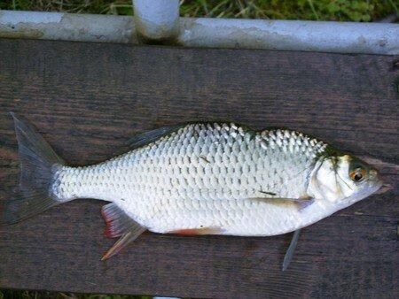 poissons_022