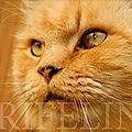 [grif' explique] les chats, mon bonheur, mon souci, ma passion, en 15 réponses.