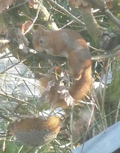 4 écureuil