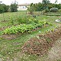 Potager en permaculture : troisième butte plantations