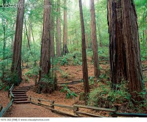 muir_woods_national_monument_california_usa_1070-382