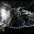 Parti des oiseaux