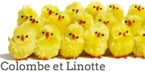 colombe linotte