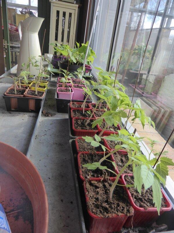 21-plants nursery (3)