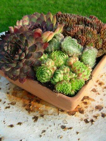 plantes_grasses17