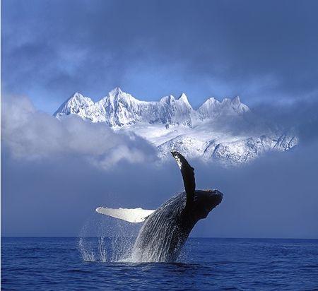 baleine_dansante