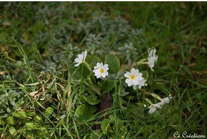 jupe_rachel_maison_victor_fleurs_laine-7