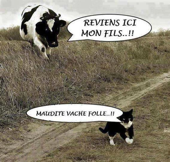 Bien-aimé chat vache humour saint etienne - Photo de humour - blog Saint  FF25