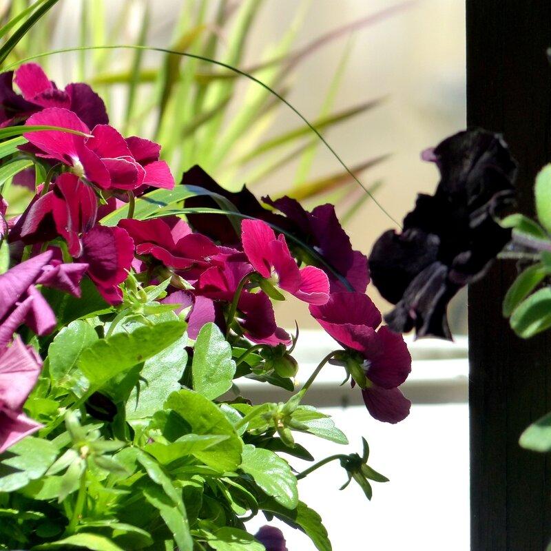 aa fleurs jardin6