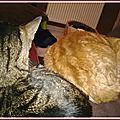 chats garde malade 1