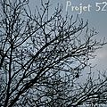 Projet 52 #51 | hiver