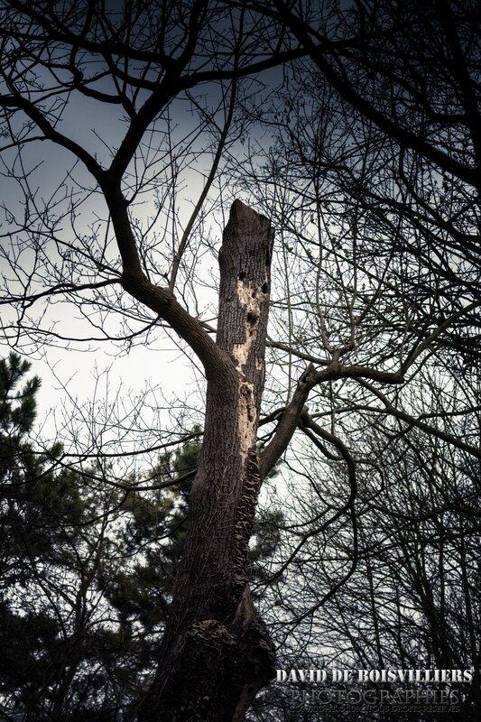Le monstre de la forêt.