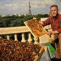 cueilleurs de miel 0610060