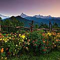 montagne fleur jardin