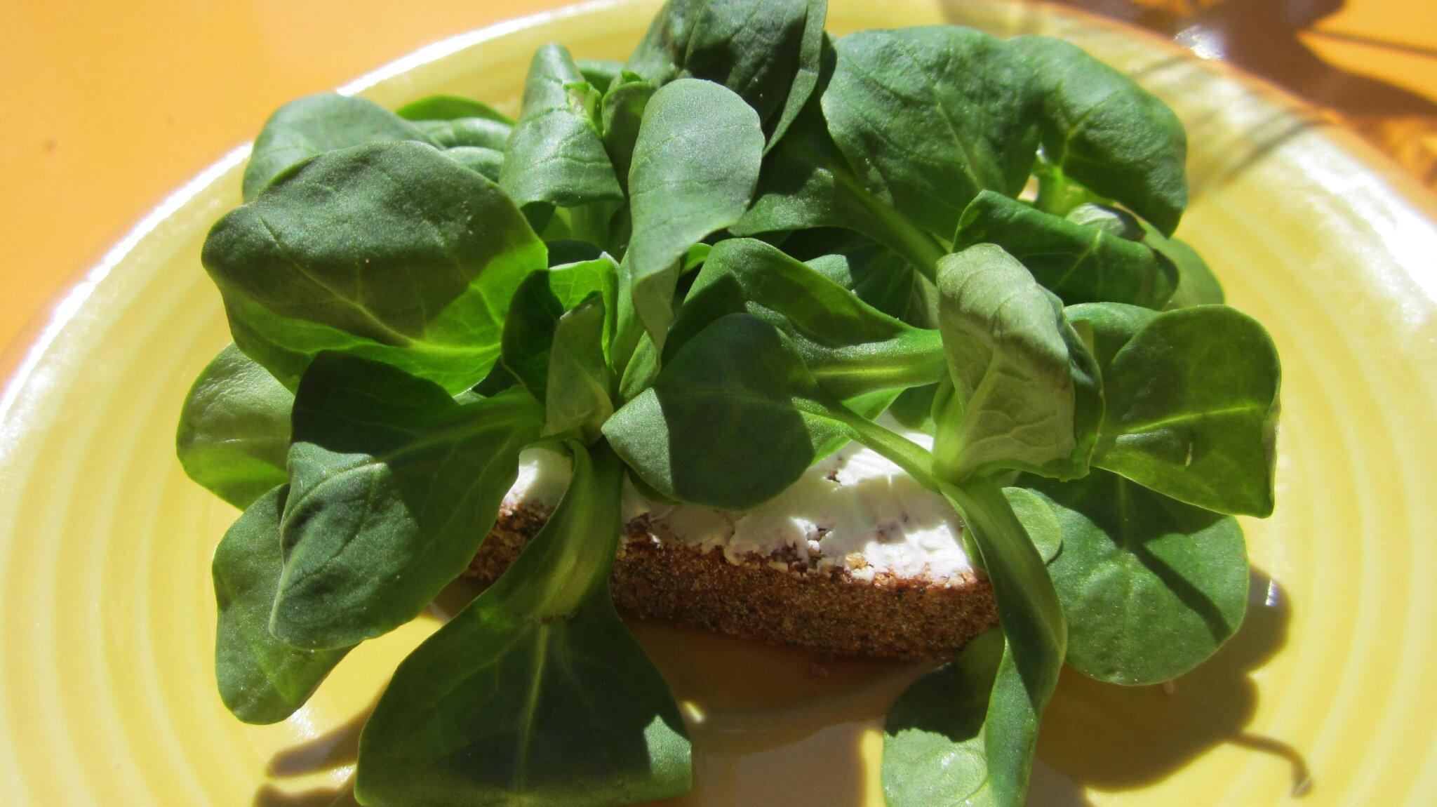 Ma dr le de tartine ou comment faire manger de la salade - Planter de la mache ...