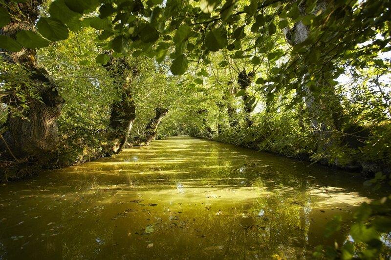 La venise verte et ses canaux ombragés