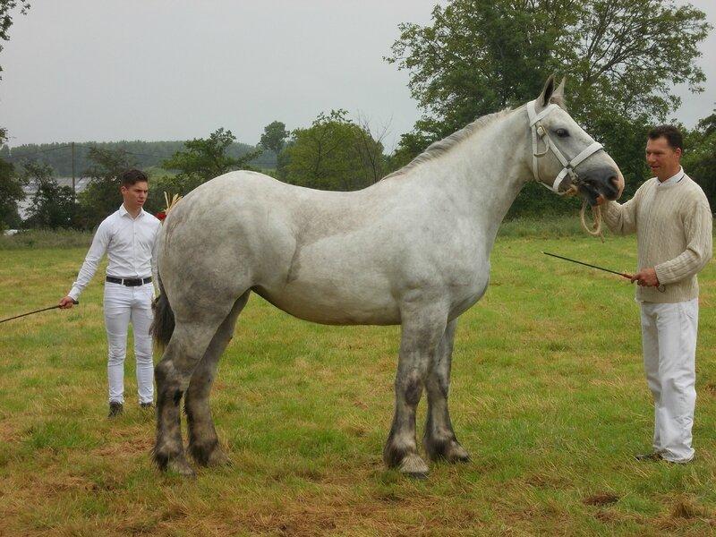 Ellipse de l'Equipay - 21 Juin 2016 - Concours d'élevage local - Bonningues les Ardres - 3e (2 ans)