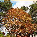 Feuillages automne 0310156