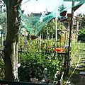 Les mirabelles dans le jardin de chantal et michel