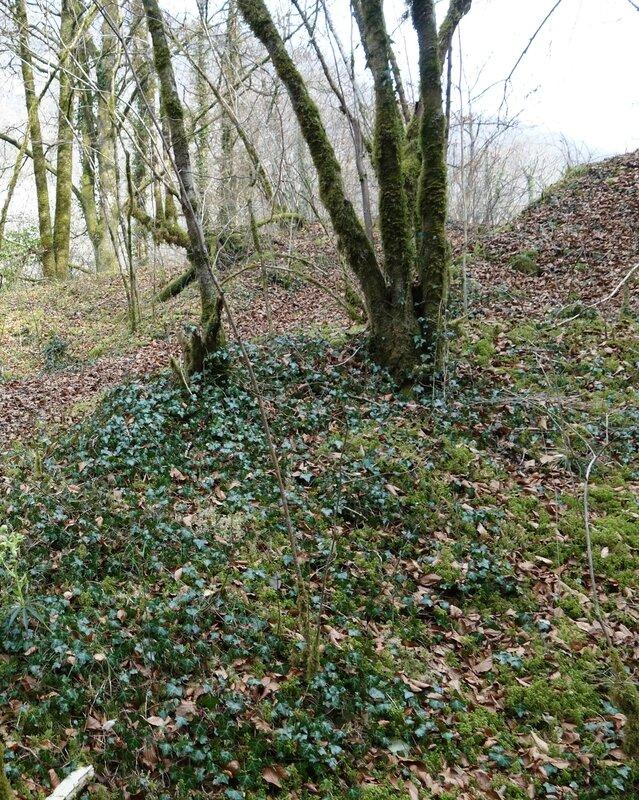 Dans le bois entre loue et ancienne voie ferrée