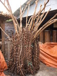 Dried_Vines_for_sale
