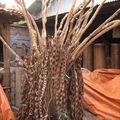 Indogemstone.com | tabourets fossiles bois et fossiles de table en bois