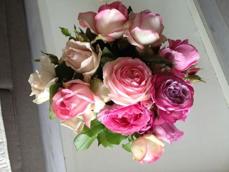 roses jardin