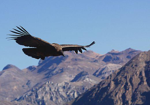 CRUZ DEL CONDOR: là où les touristes admirent les condors.