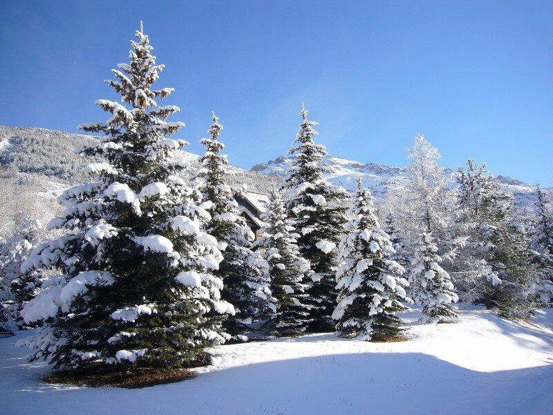 Sapins en famille photo de montagne sirenemelusine - Sapin de noel printemps ...