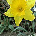Vive le printemps au jardin !