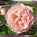 2016.11.04 les nouveaux rosiers de balanicole