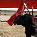 A voir // la corrida :...