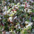Salade de riz , lentilles et cerfeuil