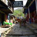 Nepal 169 Ngadi 890m alt