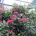 hunawihr papillon cigogne (9)