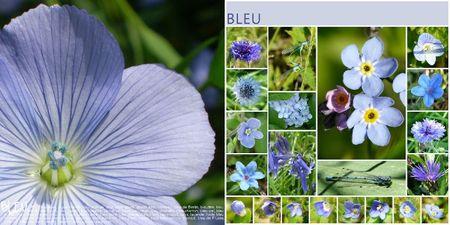 Bleu_DP