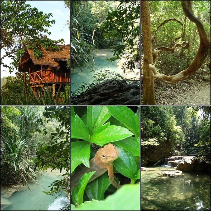Thai 5