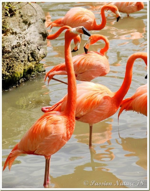 Les flamants roses (17)