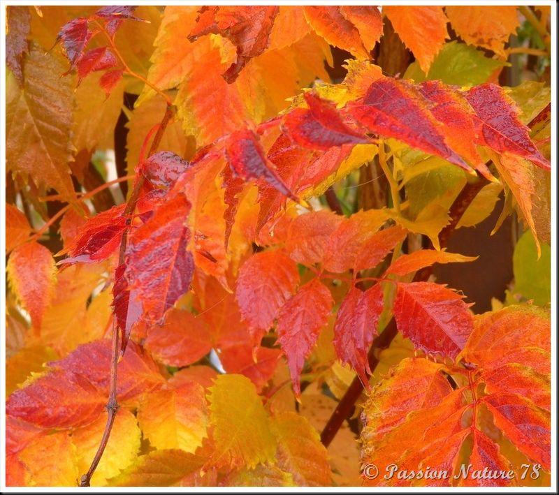 La forêt aux couleurs d'automne (18)