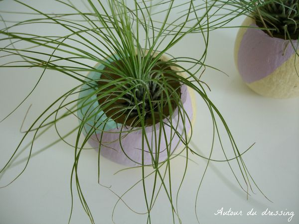 DIY Tillandsia filles de l'air