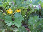 courges_5