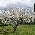 cerisier au max