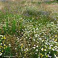 Fleurs de Leon 24061622