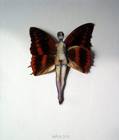 Charaxes cynthia 2012-11