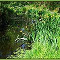 Iris jaunes 2804157