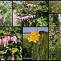 Fleurs...des champs