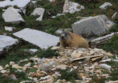 marmotte01
