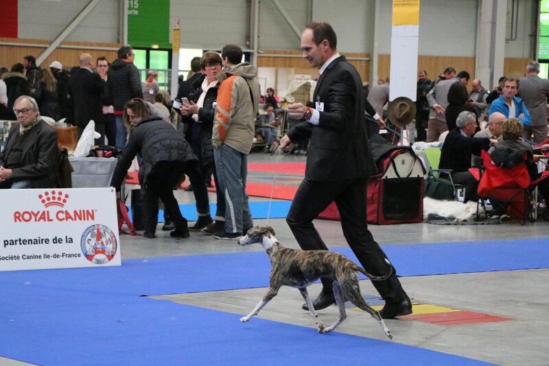 paris dog show 2017 089