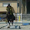 Jeux équestres manchots 2013 (208)