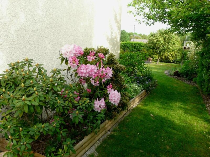 05 - Rhododendron (2)